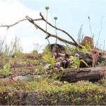 Dood hout op je dak verveelvloudigd de biodiversiteit