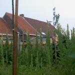 In 2008 evolueerde de bloemnweide naar een oerwoud van toortsen