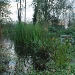 het moeras: vijver zonder folie waar het water van de grachten in uitmondt