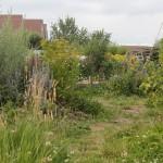 pad door het voedselbos-in-wording