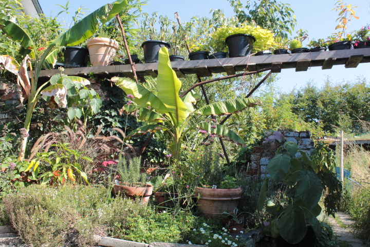 In 2015 groeit de hoeveelheid potplanten aanzienlijk