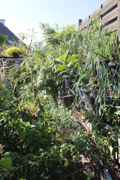tuinieren tegen de muren op