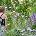 In 2009 planten we een insectenlokkende prairietuin aan  tussen de verdroogde toortsen....