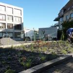 In de lente wordt de rand van de parking beplant