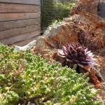 2011: ruïnemuur ve koterij, ideaal voor vetplantjes