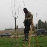 hoogstammen aangeplant door 'regionaal landschap'