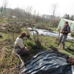 Jonge erwtenplantjes mogen de grond in