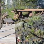 De groendakplantenkwekerij op niveau +1