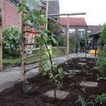 Perelaar, doornloze braam, vaste groenten en éénjarigen