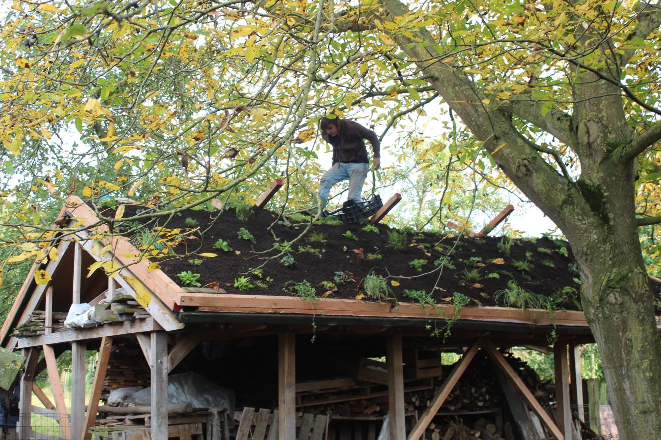 Planten én noten kraken op een dak.